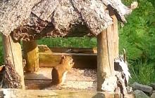 Eichhörnchen direkt vor dem Küchenfenster im Ferienhaus in Kanada, Nova Scotia, Cape Breton