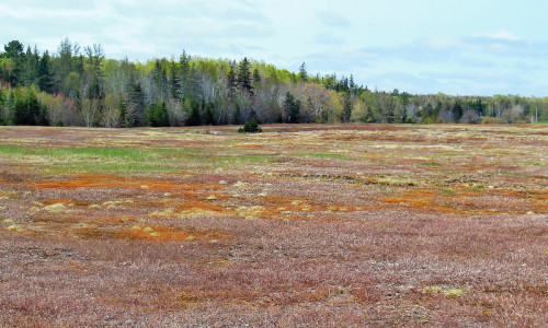 Cape Breton - Blueberry Farm direkt am Bras d`Or Lake - Inklusive Mobile Home und Ernte-Ausstattung!