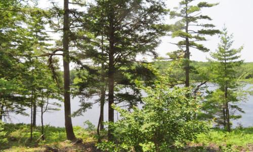 Nova Scotia - 25 Hektar großes Areal mit rd. 200 Meter eigener See-Uferfront!