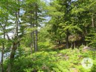 Nova Scotia - 25 Hektar großes Areal in herrlicher Naturlage mit eigener See-Uferfront