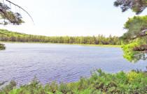 Nova Scotia - 25 Hektar großes Areal mit eigener See-Uferfront!