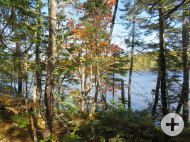 Cape Breton - Ocean River Estates - Zwei großzügige Uferlots und zwei Wald-Areale in Top-Lage am River Inhabitants