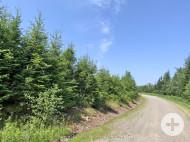 Cape Breton - 29.542 m² großes See-Ufergrundstück am McLeods Lake