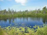 Natürlich entstandener Süsswasser-Teich - ideal für die eigene Forellenzucht
